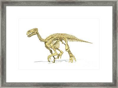 3d Rendering Of An Iguanodon Dinosaur Framed Print by Leonello Calvetti
