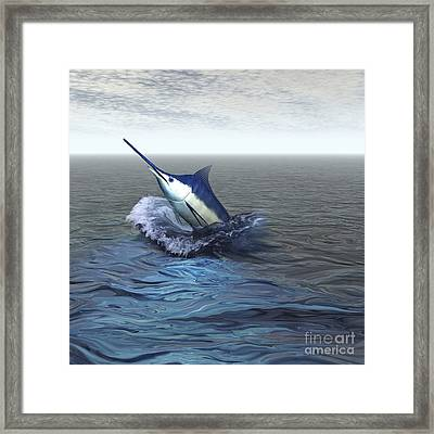 A Blue Marlin Bursts From The Ocean Framed Print by Corey Ford