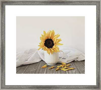 Sunshine In A Cup Framed Print by Kim Hojnacki