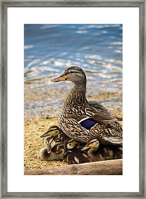 A Family Affair Framed Print by Karol Livote