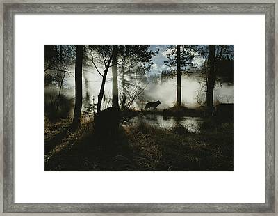 A Gray Wolf, Canis Lupus, In Silhouette Framed Print by Jim And Jamie Dutcher