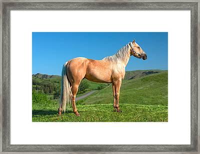 A Horse Named Shaker Framed Print