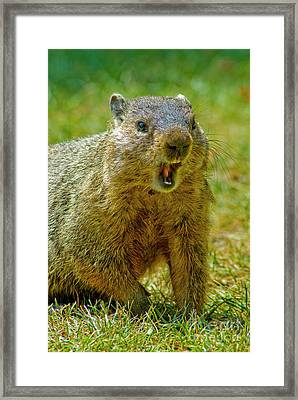 A Hungry Fellow  Framed Print