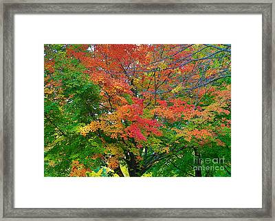 Framed Print featuring the photograph A Michigan Fall by Robert Pearson
