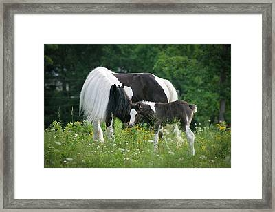 A Mother's Love Framed Print by Laurie Comfort