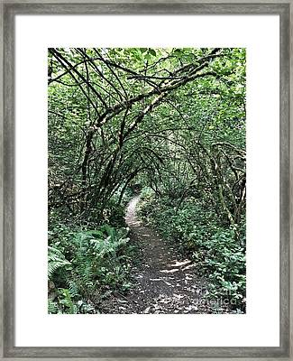 A Path Into The Unknown Framed Print
