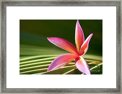 Framed Print featuring the photograph A Pure World by Sharon Mau