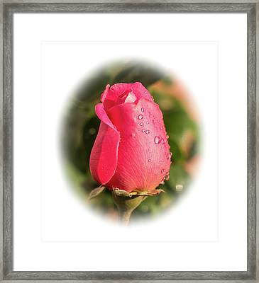 A Rose For Love Framed Print