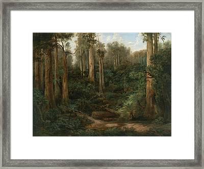 A Sassafras Gully - Gippsland Framed Print by Issac Whitehead