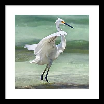 Egret Framed Prints