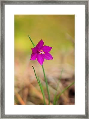A Sole Flower Framed Print by Jeff Swan