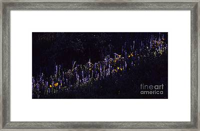 A Streak Of Nature Framed Print