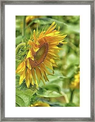 A Sunny Day Framed Print