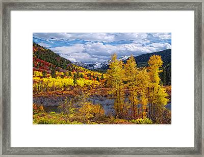 A Symphony Of Colors Framed Print