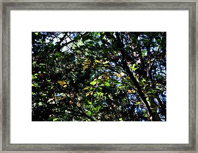 Framed Print featuring the photograph A Touch Of Autumn by Marilynne Bull