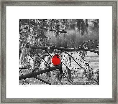 A Touch Of Red Framed Print by Concolleen's Visions Smith