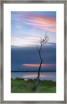 Framed Print featuring the photograph A Tree  by Bruno Rosa