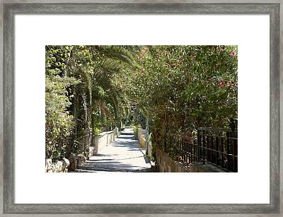 A Walk In Rehavia Framed Print by Susan Heller
