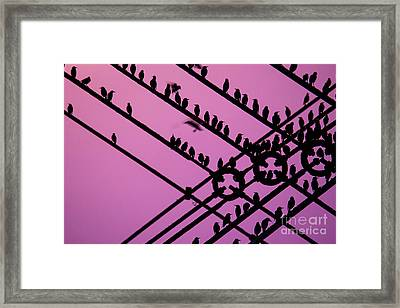 Aberystwyth Pier And Starlings At Dusk Framed Print