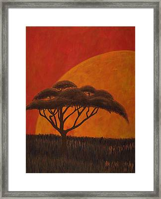 Acacia At Sunset Framed Print by Diane Korf