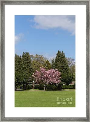 Accolade Cherry Tree Framed Print by Bahadir Yeniceri