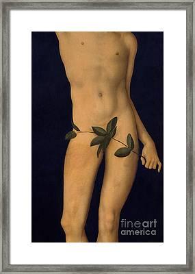 Adam Framed Print by The Elder Lucas Cranach