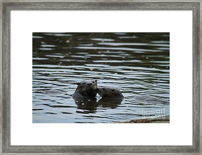 Affection Framed Print by Jack Norton