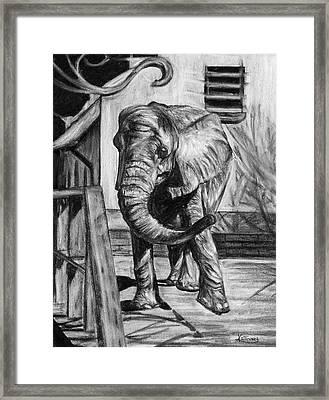African Elephant Framed Print by Kacey Thorn