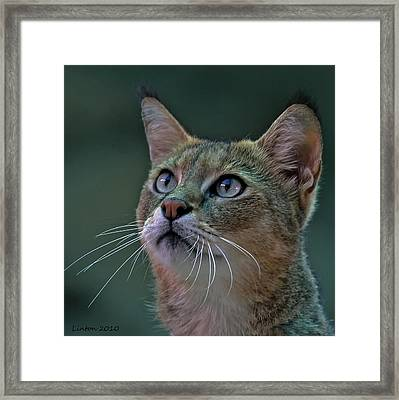 African Wild Cat Framed Print by Larry Linton