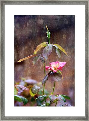 After The Rain Framed Print by Joan Bertucci