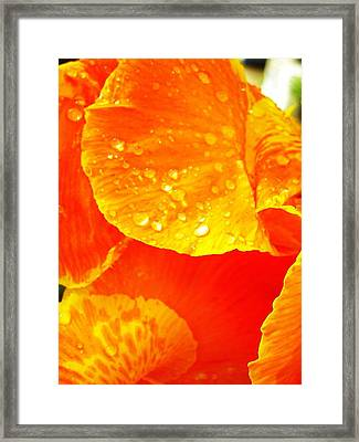 After The Rain ... Framed Print by Juergen Weiss