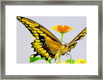 Afternoon Sip Framed Print