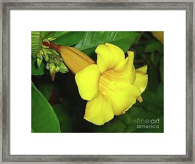 Framed Print featuring the photograph Alamanda Blossom by Merton Allen