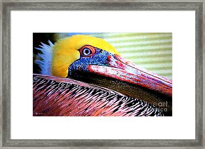 Albatross King Framed Print