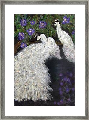 Albino Peacocks Framed Print by Mikki Alhart