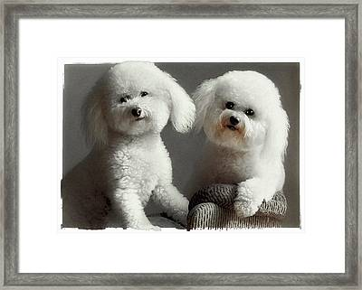 All Smiles Framed Print by Lynn Andrews