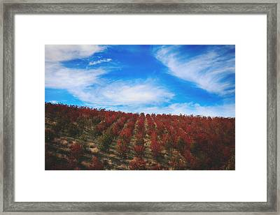 All Together Now Framed Print by Laurie Search