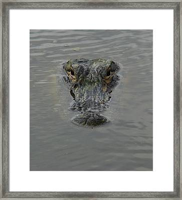 Alligator One Framed Print by Bruce W Krucke