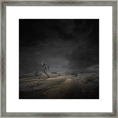 Alone Framed Print by Zoltan Toth