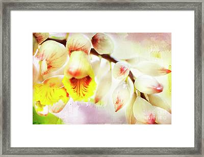 Alpinial Galangal Framed Print by MaryJane Armstrong
