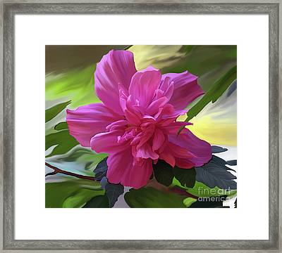 Althea Hibiscus I Framed Print by Patricia Griffin Brett