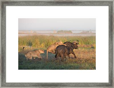 Ambush Framed Print