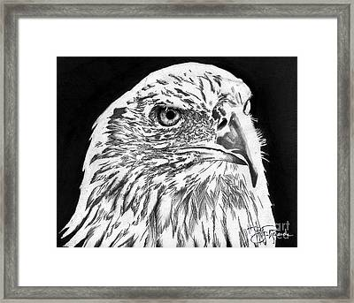American Bald Eagle Framed Print by Bill Richards