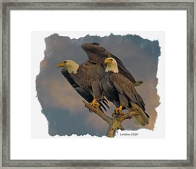 American Bald Eagle Pair Framed Print by Larry Linton