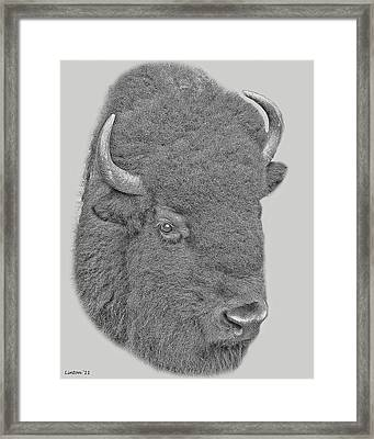 American Bison Framed Print by Larry Linton