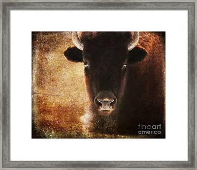 American Bison Framed Print by Olivia Hardwicke