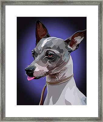 American Hairless Terrier  Framed Print