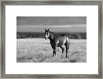 American Quarter Horse Framed Print