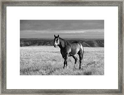 American Quarter Horse Framed Print by Todd Klassy