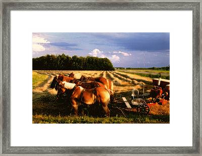 Amish Hay Rig Framed Print by Roger Soule